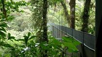 Monteverde Cloud Forest and Butterfly Garden from Guanacaste, Guanacaste and Northwest, Nature & ...