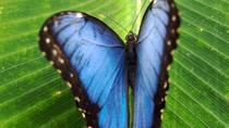 Monteverde Cloud Forest and Butterfly Garden from Guanacaste, Guanacaste and Northwest, Multi-day ...