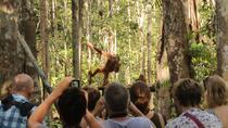 ORANGUTAN SHARE TRIP, Indonesia, Cultural Tours