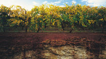 Leroy's Coonawarra Wine Experience Tour, Melbourne, Cultural Tours