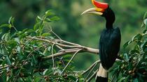 2-Night Danum Valley Borneo Rainforest Lodge Hiking and Wildlife Adventure, Sabah, Multi-day Tours