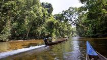 3-Day Jungle Experience in Taman Negara from Kuala Lumpur, Kuala Lumpur, Multi-day Tours