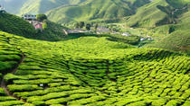3-Night Cameron Highlands and Penang Tour from Kuala Lumpur, Kuala Lumpur, Private Sightseeing Tours