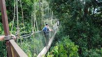 4-Day Jungle Experience in Taman Negara from Kuala Lumpur, Kuala Lumpur, Multi-day Tours