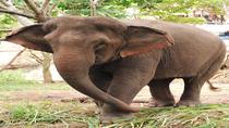 Elephant Orphanage Sanctuary and Aboriginal Settlement Tour from Kuala Lumpur