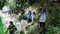 Full-Day Rainforest Adventure from Kuala Lumpur, Kuala Lumpur, Nature & Wildlife
