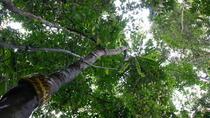 Half-Day Langkawi Rainforest Trekking Tour, Langkawi, Hiking & Camping