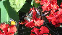 Half-Day Tour to Tropical Spice Garden and Entopia by Penang Butterfly Farm, Penang, Half-day Tours