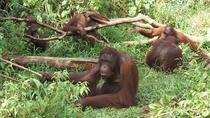 Orang Utan Island and Taiping from Penang, Penang, Day Trips