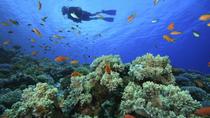 PADI Scuba Diving in Tunku Abdul Rahman Marine Park from Kota Kinabalu, Kota Kinabalu