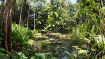 Botanic Gardens Bike Tour, Singapore, Bike & Mountain Bike Tours