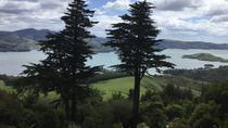 Excursión por la costa: Dunedin City Highlights, Coastal Train y Castle Garden, Dunedin y la ...