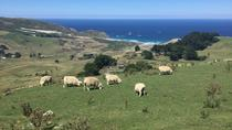 Excursion Dunedin, péninsule d'Otago et train côtier, Dunedin & The Otago Peninsula, Day Trips