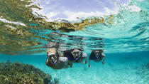 Sydney 3-Hour Snorkeling Tour, Sydney, Other Water Sports