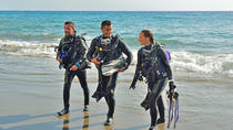 Sydney Guided Shore Dive, Sydney, Half-day Tours