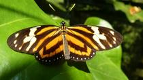 Admission to Andoke Butterfly Center in Cali with Guide, Cali, Attraction Tickets