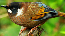 Shivapuri Bird Watching Tour, Kathmandu, Day Trips