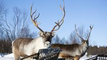 All Day Reindeer Adventure, Rovaniemi, 4WD, ATV & Off-Road Tours