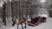 Snowmobile Safari to Reindeer and Husky Farms from Rovaniemi