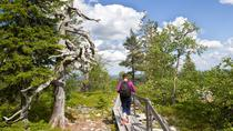 Trip to Pyhä-Luosto National Park and Amethyst Mine, Rovaniemi, Attraction Tickets