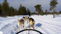 Visit a Husky Farm and Husky Safari from Kemi, Rovaniemi, Ski & Snow