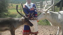 Visit a Reindeer Farm and Wild Forests, Rovaniemi, Cultural Tours