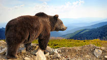 Bear Sanctuary Bran Castle and Brasov medieval town with a professional licensed guide  - Day trip, ...