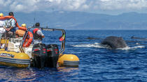 Azoren Walbeobachtungs-Expedition, Azores, Dolphin & Whale Watching