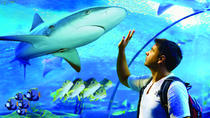 Cairns Aquarium Admission Ticket, Cairns & the Tropical North, Attraction Tickets