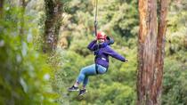 Rotorua Forest Zip Line Canopy Adventure, Rotorua, Eco Tours