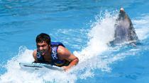 Canopy Express and Dolphin Swim Adventure Combo Tour, Puerto Vallarta, Ziplines