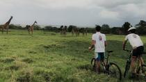 1 day Walking and Bike Safari in Arusha National Park, Arusha, Attraction Tickets