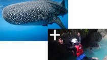 Full day Canyoning and Whaleshark Adventure, Cebu, 4WD, ATV & Off-Road Tours