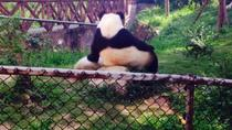 Half-day Private Panda Tour with Vegetarian Lunch in Nunnery, Chengdu, Private Sightseeing Tours