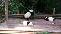 One-day Private Panda Tour with Chengdu City Visit Plus Opera Show at Night, Chengdu, Opera