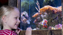 Skip the Line: SEA LIFE Oberhausen Admission Ticket, Düsseldorf, Attraction Tickets