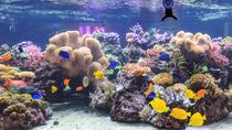 Saltafila: biglietto di ingresso al SEA LIFE Speyer, Heidelberg, Attraction Tickets