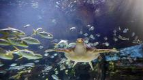 Skip the Line: SEA LIFE Timmendorfer Strand Admission Ticket, Rostock, Attraction Tickets