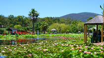 Blue Lotus Gardens Entrance Ticket in Melbourne, Melbourne, Attraction Tickets