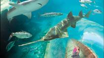 Discover Atlantis, Nassau, Attraction Tickets