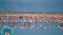 Tanzania Wildlife Encounters - 6 Days, Arusha, Cultural Tours