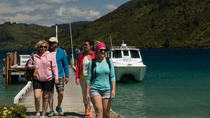Marlborough Sounds Cruise & 3 heures Scenic Walk, Picton, Day Cruises