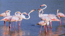 Camargue Tour from Aix-en-Provence, Aix-en-Provence, Private Sightseeing Tours