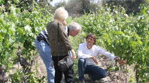 CHILEAN WINE LOVERS IN CASABLANCA VALLEY, Santiago, Private Sightseeing Tours