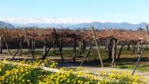 CHILEAN WINE LOVERS IN COLCHAGUA VALLEY, Santiago, Private Sightseeing Tours