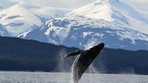 Juneau Shore Excursion: Whale-Watching Cruise with Crab Lunch or Dinner, Juneau