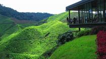 Cameron Highland Day Tour Private, Kuala Lumpur, Cultural Tours