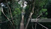 Taman Negara National Park with Canopy Walk Full Day Tour, Kuala Lumpur, Full-day Tours