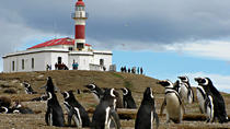 Magdalena & Marta Island Navigation (Penguin Tour), Punta Arenas, Ports of Call Tours