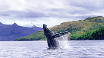 Whale Watching Full Day, Punta Arenas, Day Cruises